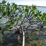 mangrove Keys Boat Tours