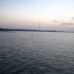 Keys Boat Tours dolphin