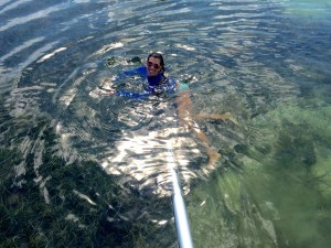 Swimming with Keys Boat Tours