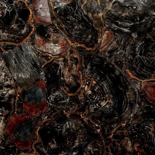 Black Petrified Wood 1