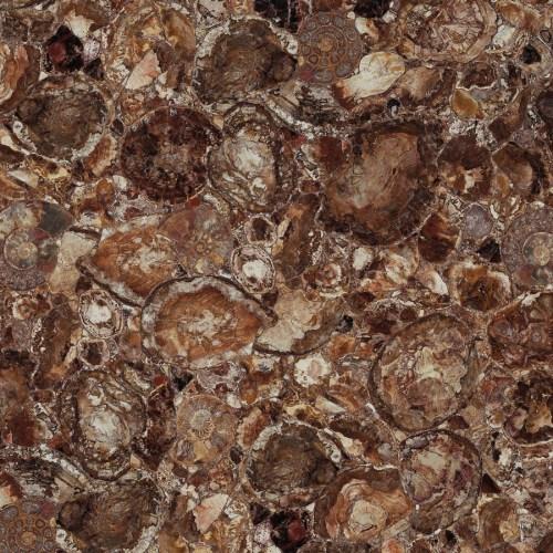 Brown Petrified Wood 1