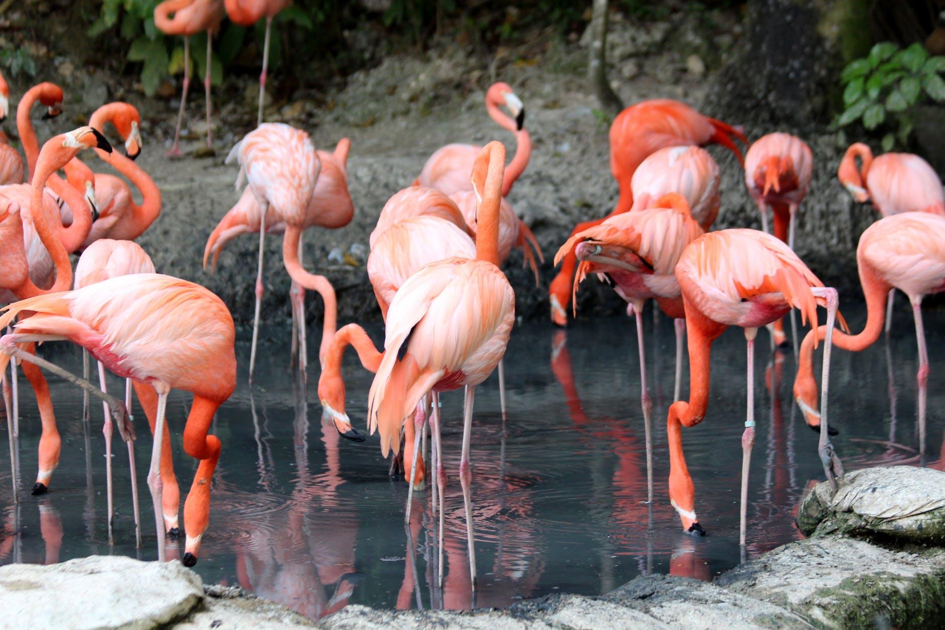 Ostriches Zoo Atlanta Summer Camp