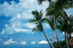 A beach with palm trees and a body of water - Little Palm Island Resort & Spa