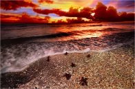 'Maiden Voyage' captures hatchling sea turtles racing for the water.