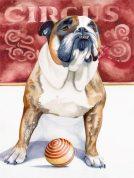 'Circus Dog' by Sean Callahan