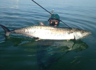 #fishing: Spearfishermen are targeting kingfish - A fish on a boat in a body of water - Water