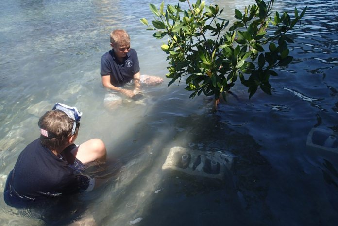 Treasure Village Montessori students plant mangroves - A man swimming in a body of water - Treasure Village Montessori Charter School