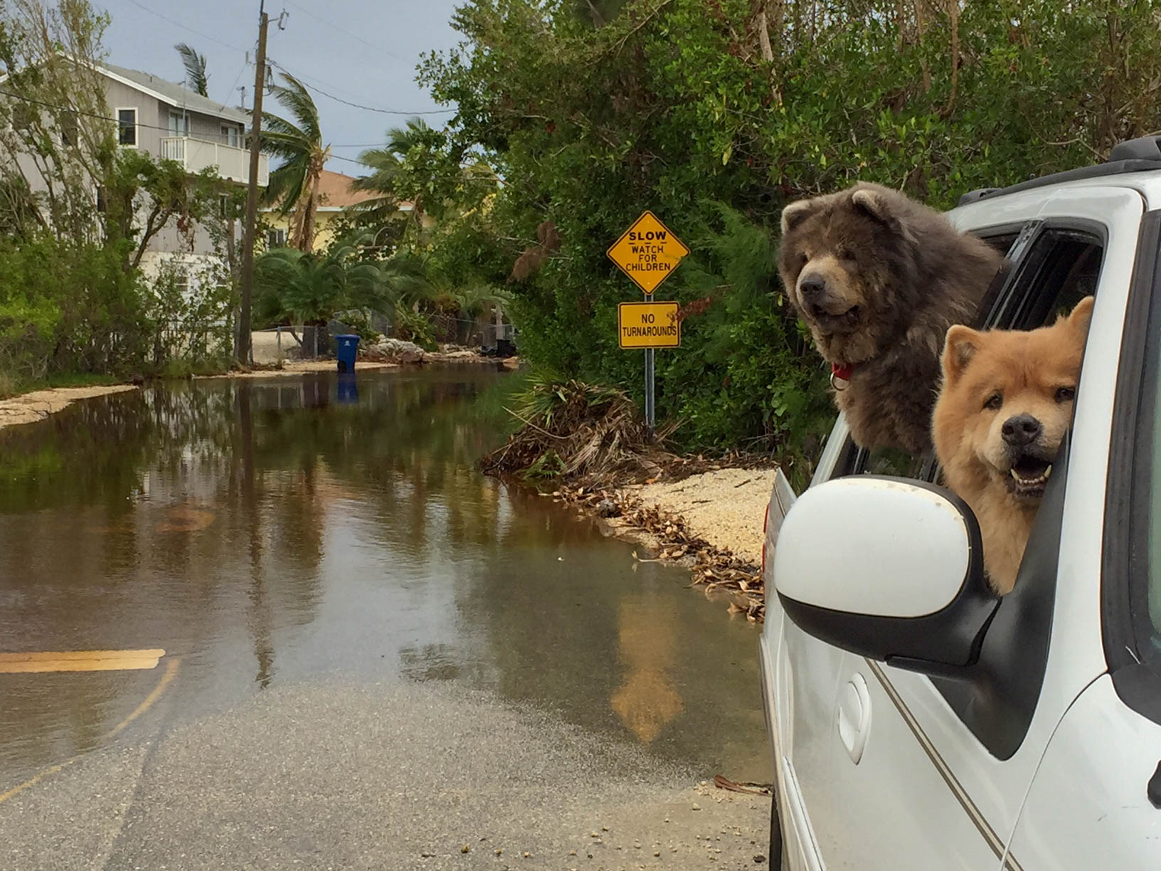 King Tides To Continue Florida Keys Weekly Newspapers