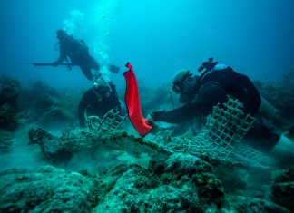 LOCALS ROLL UP THEIR SLEEVES AND JUMP IN - A person swimming in the water - Underwater diving
