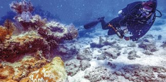 Antibiotics for the reef – BOCC hears coral disease treatment update - Florida Keys National Marine Sanctuary
