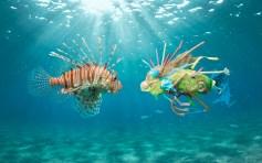 Keys photographer captures environmental crisis - OceanCare