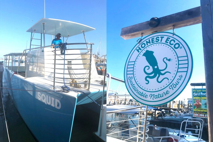 Going Green on the Deep Blue – Honest Eco launches first electric hybrid charter boat - A sign on the side of a boat - Dolphin Watch by Honest Eco®