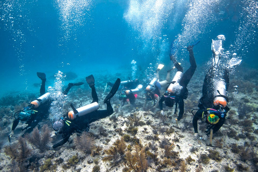 - A group of people swimming in the water - Coral reef