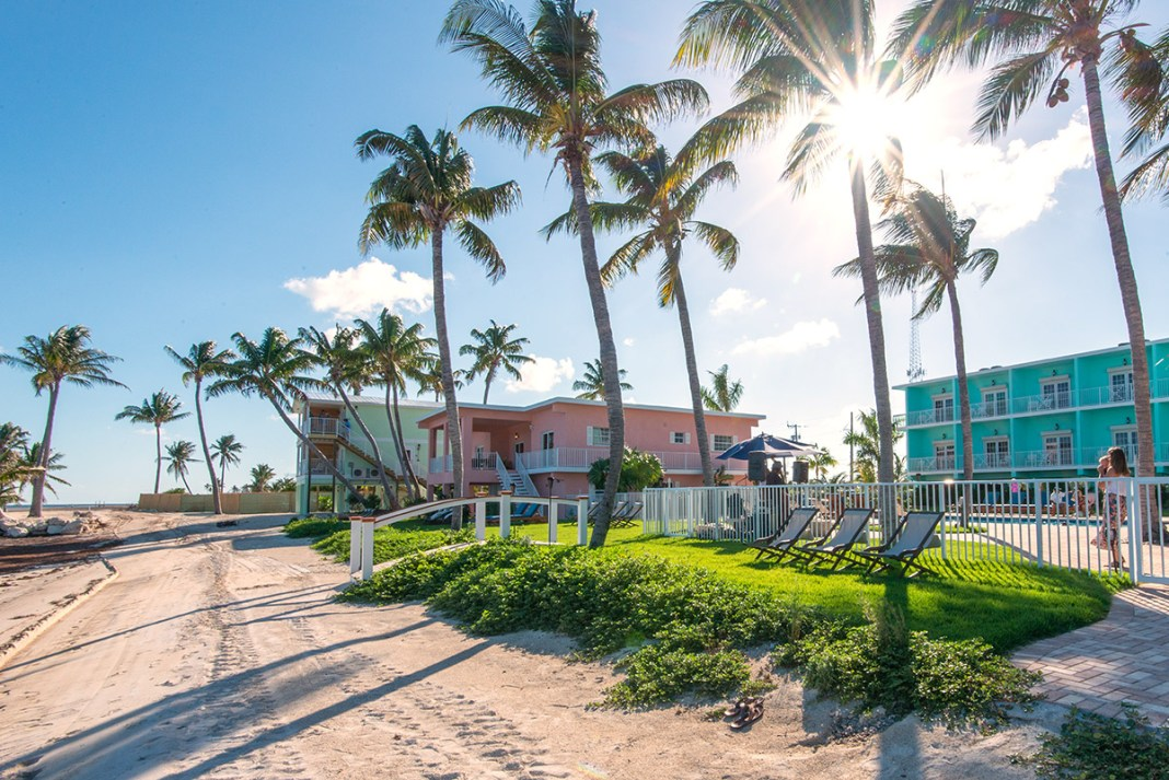 A first look at the new boutique resort on Grassy Key - A palm tree - Grassy Key