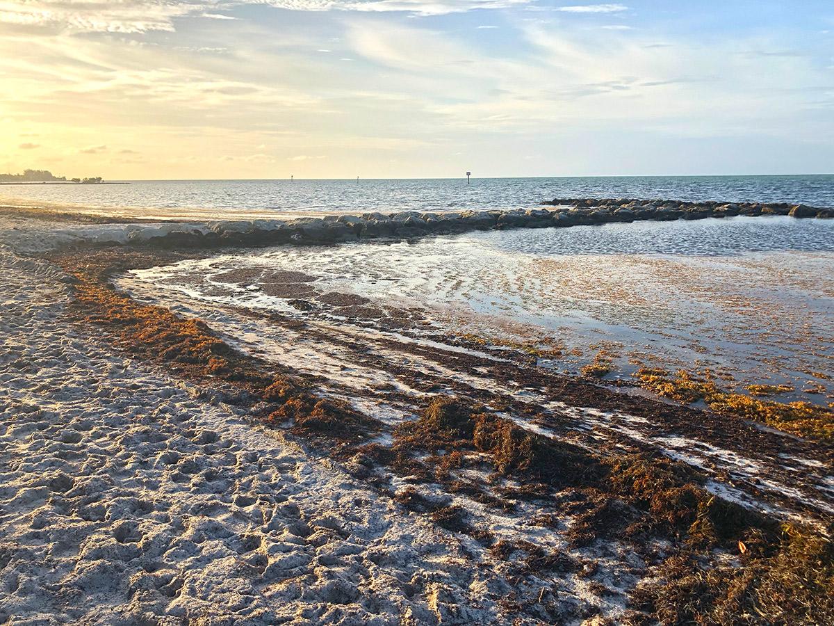 Seaweed Smells Like Trouble Record – Breaking Sargassum