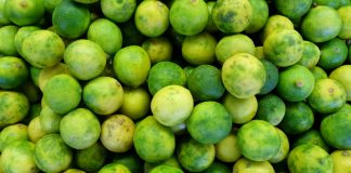Killing Cancer with Key Limes - A group of green fruit - Key lime