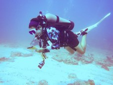 CELEBRATING CONSERVATION DECK: REEF Fest brings education, adventure - A person swimming in the water - Scuba diving
