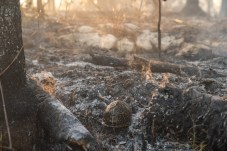 Big Pine gets burned – Controlled fire prevents catastrophe - A close up of a dirty field next to a forest - /m/083vt