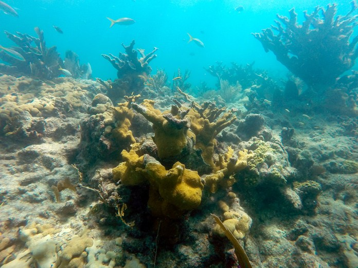 - Underwater view of a coral - Coral reef