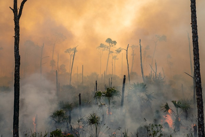 TOP 10 PHOTOS OF THE MIDDLE KEYS - A tree with smoke coming out of it - Forest