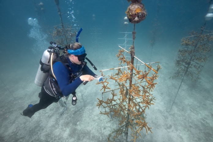 CRF, Mote kick up restoration efforts in 2019 - A man flying through the air while riding skis - Coral reef