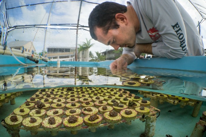 NOAA Launches $97 Million Targeted Mission to Save Florida Reef Tract - A man standing in front of a cake - Coral