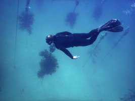 NOAA Launches $97 Million Targeted Mission to Save Florida Reef Tract - A man in a swimming pool - Free-diving