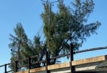 ELVES DRESS FRED – Keys tree sends seasonal beacon - A tree in front of a building - Bayou