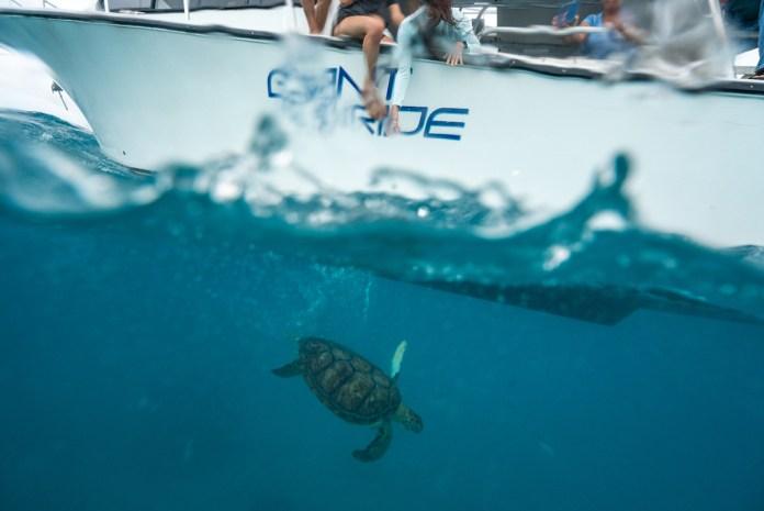 Turtle returns to waters off Alligator Reef - Loggerhead sea turtle