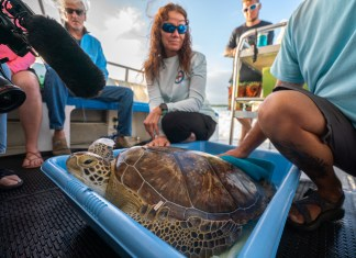 Turtle returns to waters off Alligator Reef - A group of people sitting around a table - Tortoise
