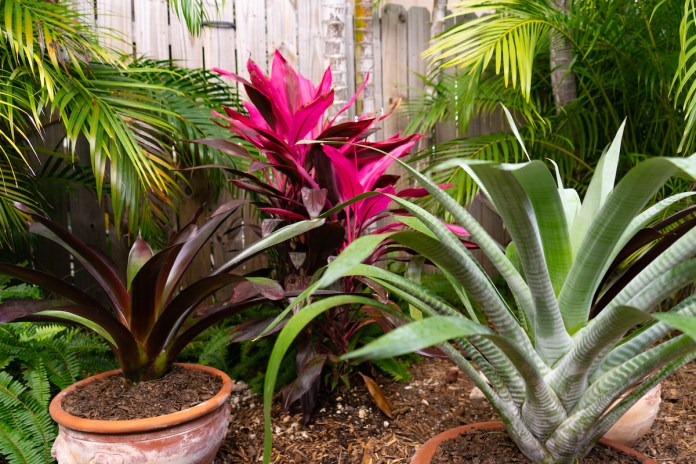 Garden Walk Makes Five Stops Florida Keys Weekly Newspapers