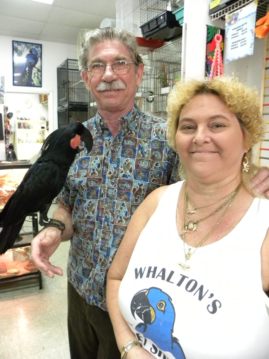 Whalton's Pet Shops current owner, Ed Kilheffer, with his prized palm cockatoo, Mr. Spock and longtime employee and Big Pine store manager, Sandi Pipock