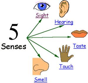 5 vital senses