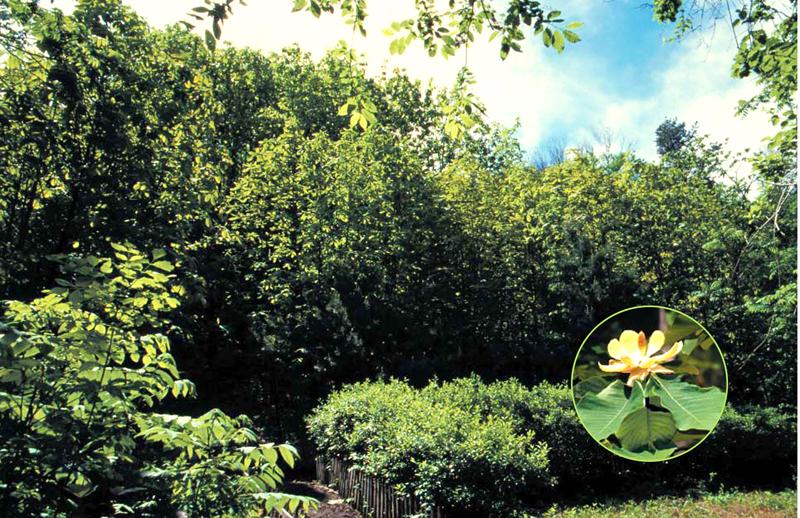 Reserva natural de especie protegida en Sakju