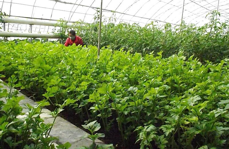 Agricultura en invernaderos