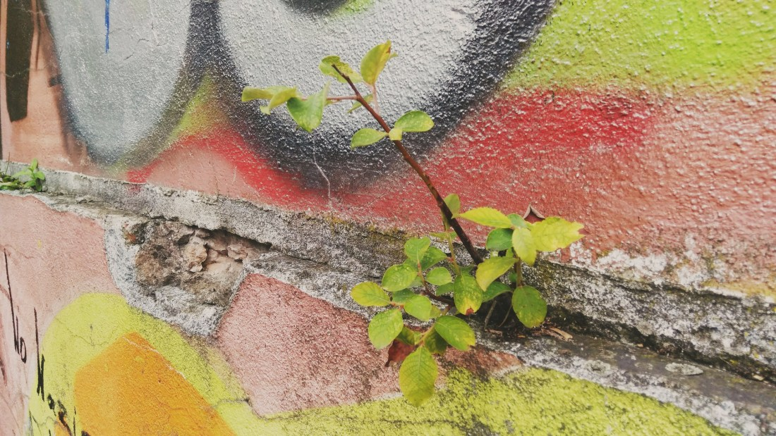 A photo showing a plant growing out of a concrete wall