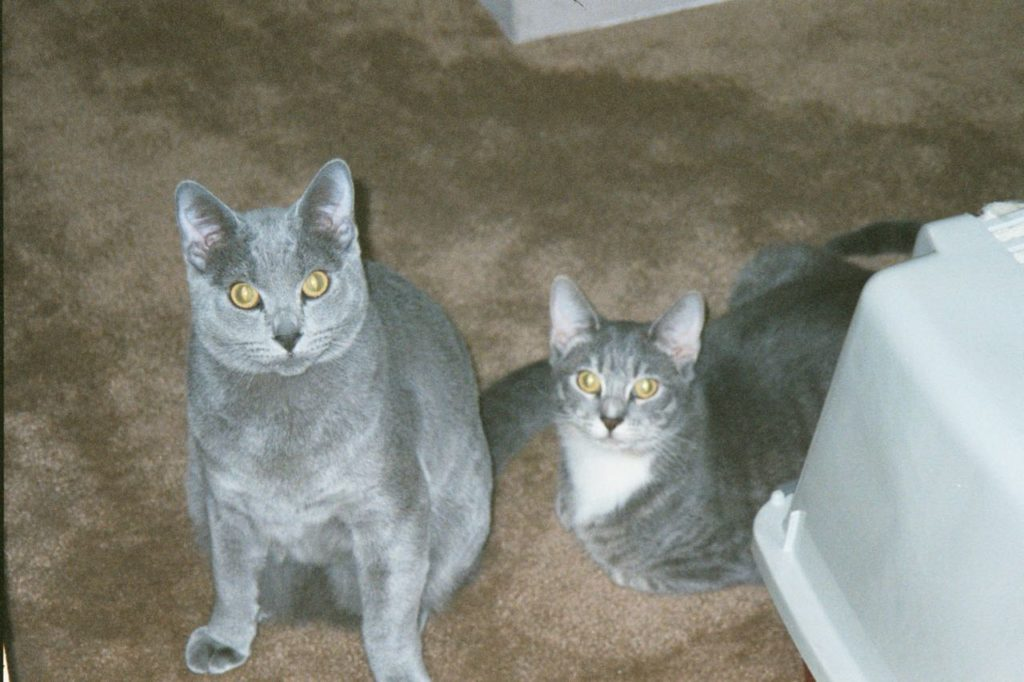 Henry and Alice, the best cats that ever were.