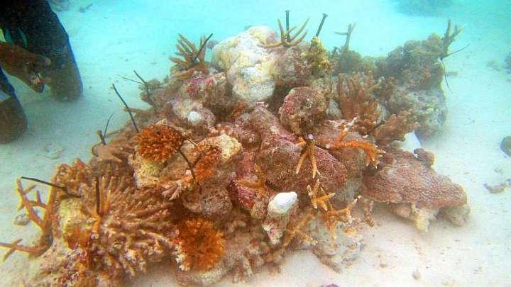 CoralDoctors_CoralFarm_StonePile_1