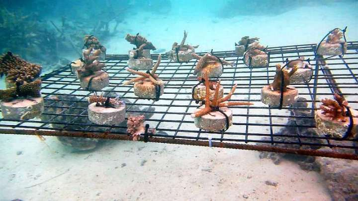 CoralDoctors_CoralFarm_Tables_3