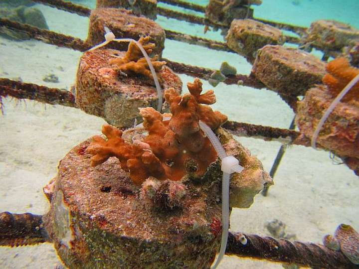 CoralDoctors_CoralFarm_Tables_5