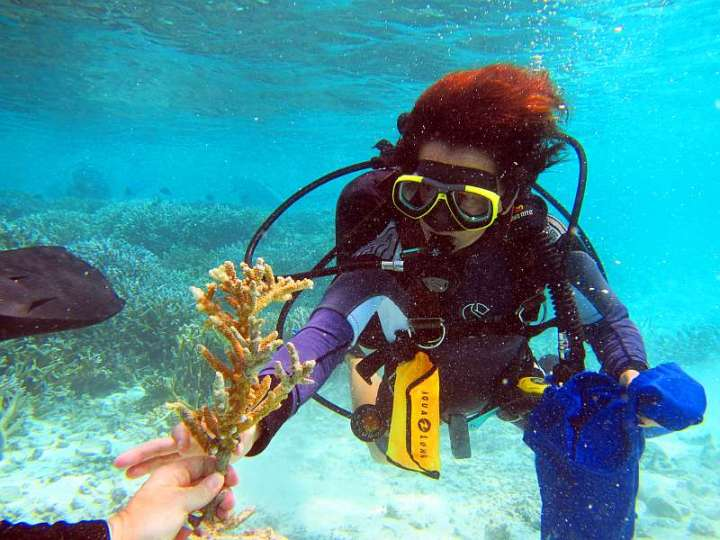 CoralDoctors_PracticalLesson_4