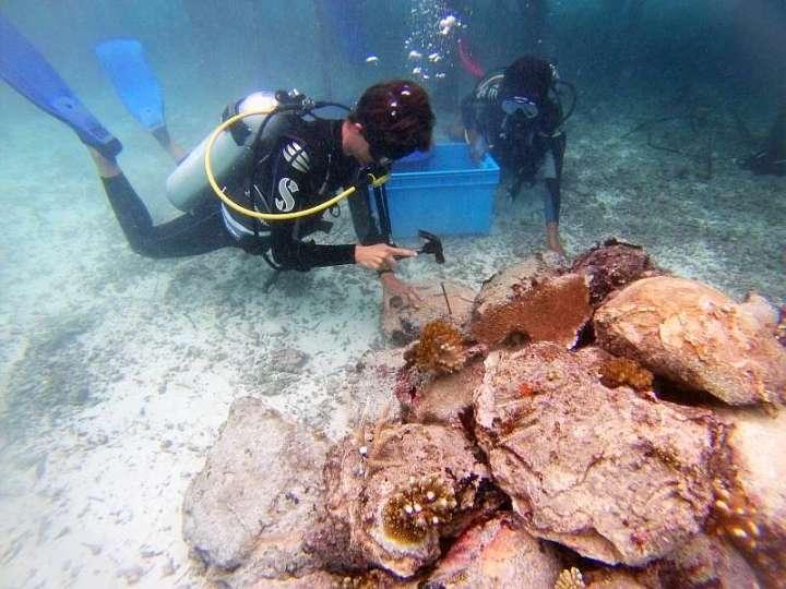 CoralDoctors_PracticalLesson_5