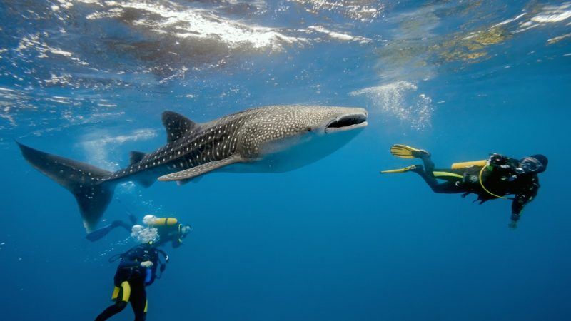 divers and snorkelers to the  to the undersea world