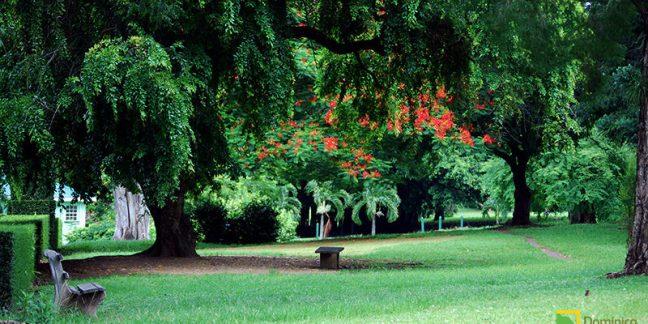 botanical-garden-dominica-800x400