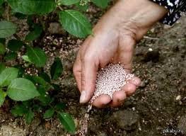 Цветы-многолетники для сада неприхотливые долгоцветущие ...