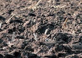 Цветы для дачи - многолетники: фото с названиями - Плодородье