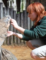 Scavelli carefully inspects a scratch under the eye of the male goliath tortoise.
