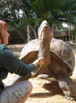 """""""Goliath tortoises are a lot like dogs,"""" said Scavelli, """"they will always follow you around for food and attention."""""""