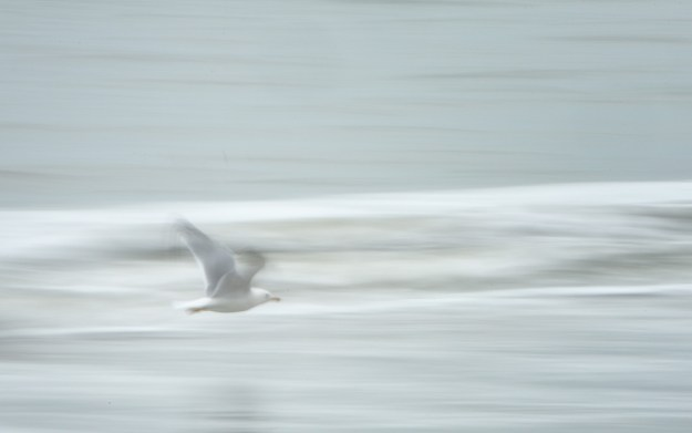 140604_Sea Gull Pan by Karl Graf.
