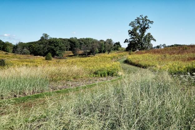 140927_Longwood Meadow 1 by © 2013 Karl Graf.